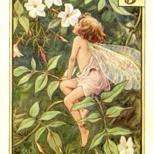 Jasmine perfume, found!