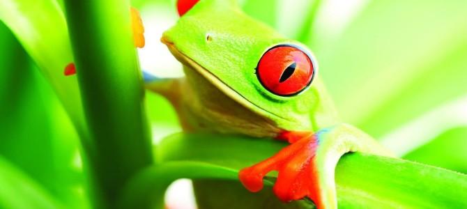 La simbologia della rana