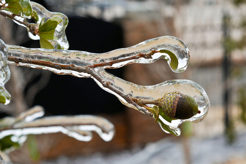 acorn ice ghianda ghiaccio