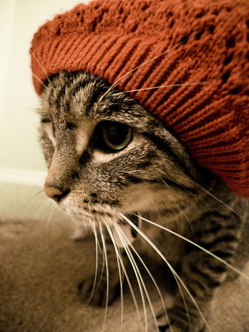 cat beanie tabby soriano cuffia cappellino