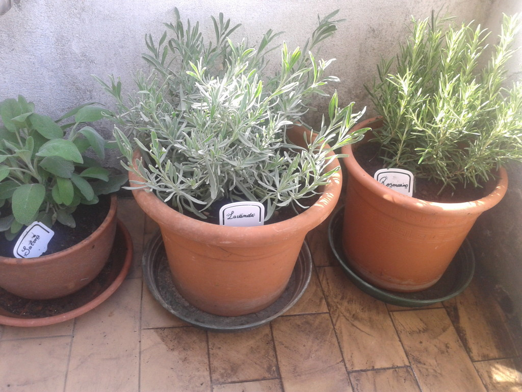 potted garden giardino pensile