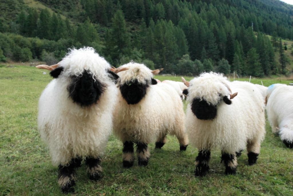 RL Shaun The Sheep (by Niels Kuppens)